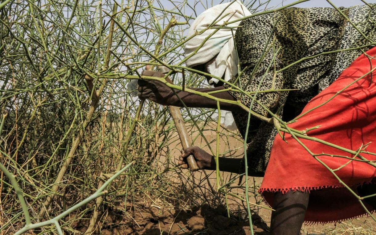 darfur-woman-chopping-2015-estevens