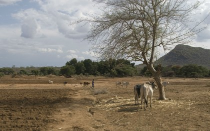 Along the banks of the Dawa River in southeast Ethiopia, herders are learning to farm with irrigation, fearing drought and rising food prices. Photo: Eva-Lotta Jansson/Oxfam America