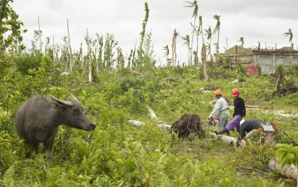 "A water buffalo stands beside members of the Cabuynan Farmers Association in Tanauan, Leyte who lost their trees and their livelihoods during Typhoon Haiyan. The Association's Project Manager, Crispin Miranda, said, ""Let us work, let us help each other in order to succeed."" Photo: Simon Roberts / Oxfam"