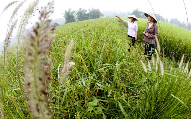 Loc Thi Su (right) and Dao Thi Bon are visiting their rice field in Na Tap village, Dong Thinh commune, Dinh Hoa district, Thai Nguyen province, Vietnam. Photo: Chau Doan / Oxfam America